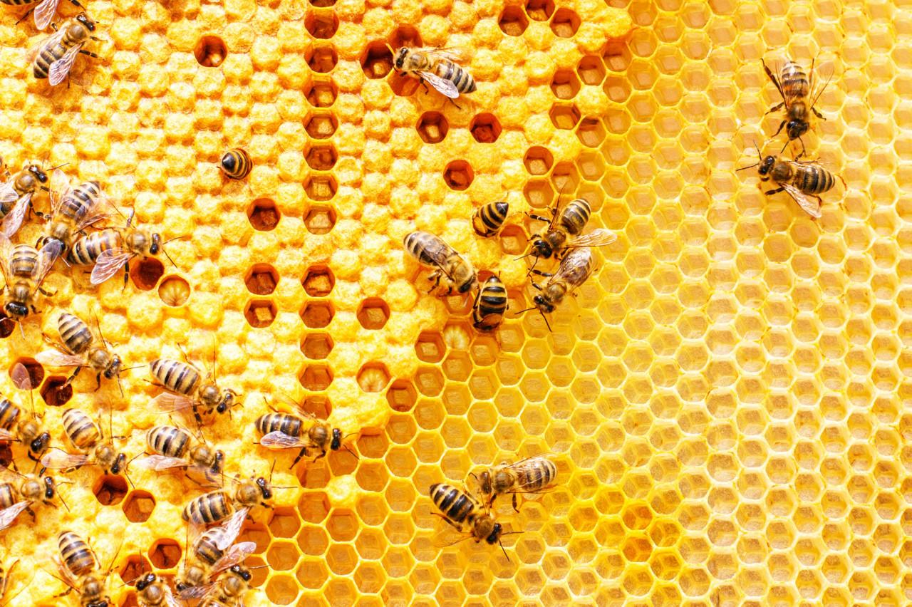 Arı Poleni Faydaları ve Besin Değerleri
