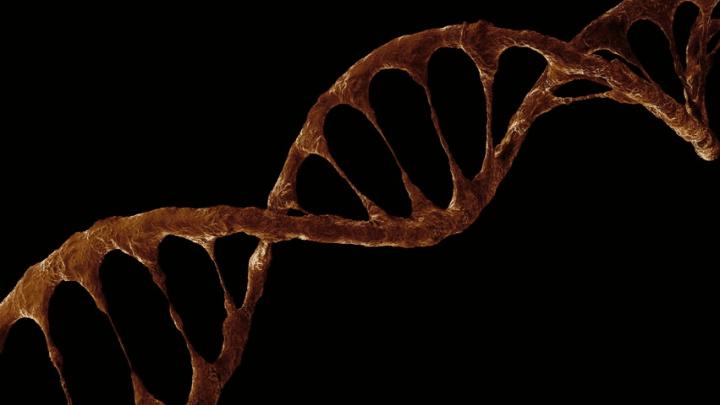 Bir Çikolatacı Mısın? Genlerinizi Suçlayabilir Misiniz?