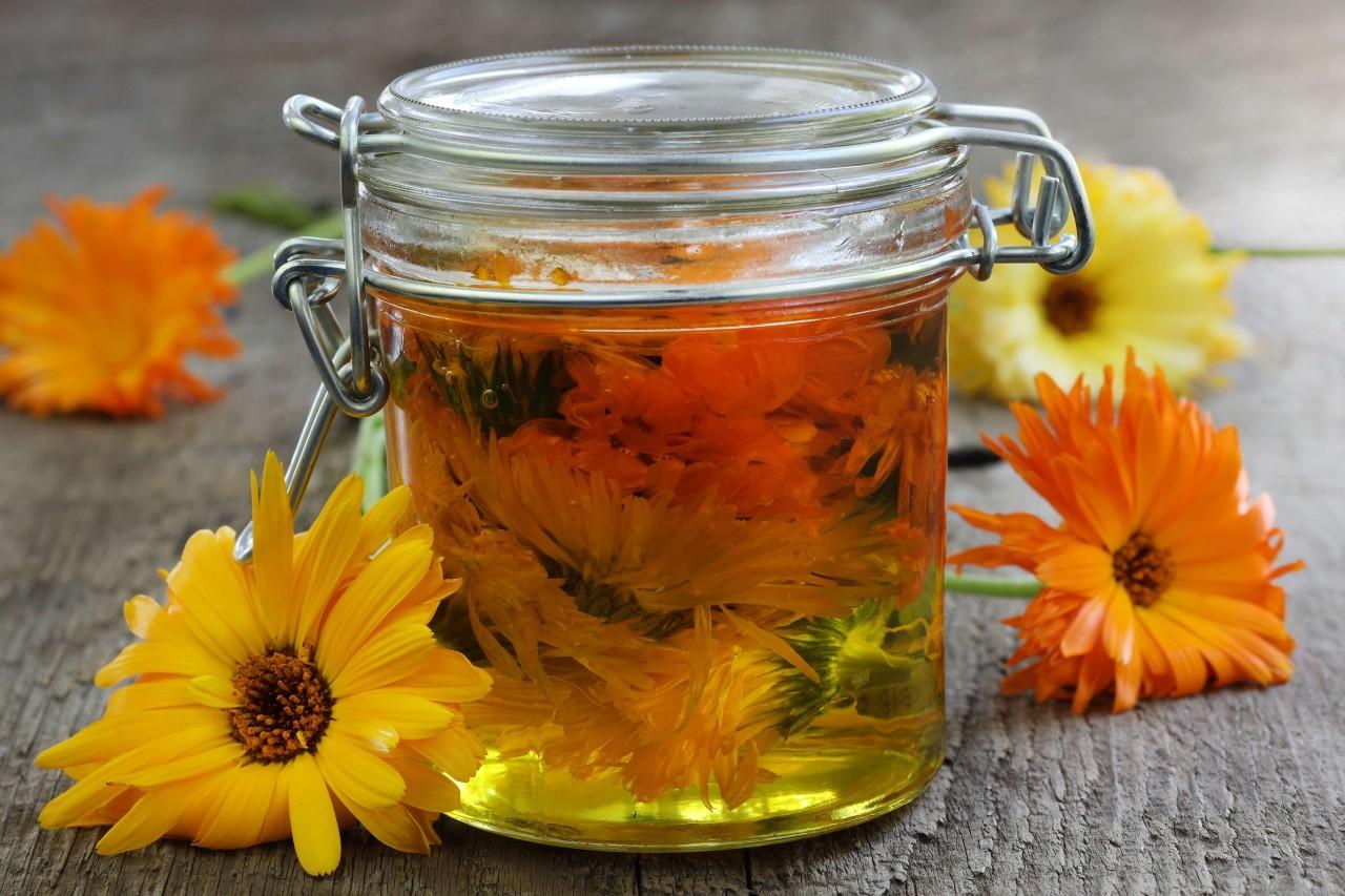 Aynısefa Bitkisi Çayı ve Faydaları