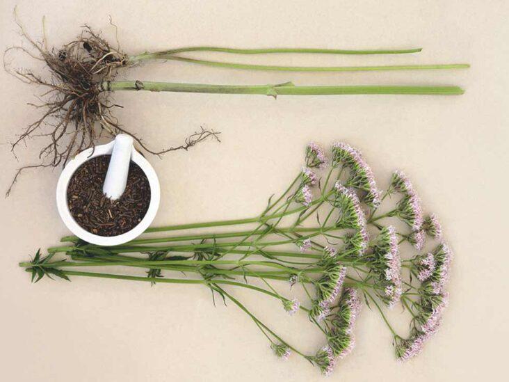 Что такое корень валерианы? помогает расслабиться и лучше спать