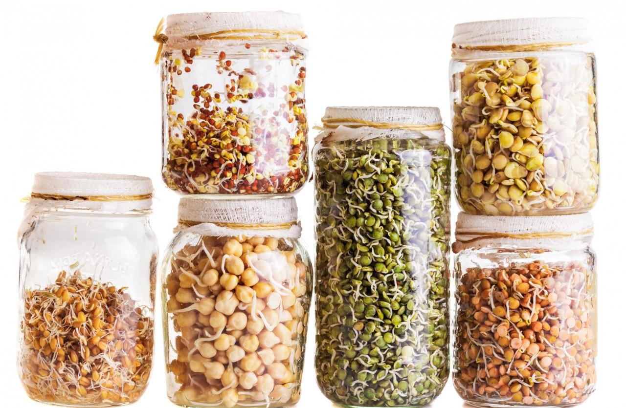Filizlenmiş Tahıllar ve Baklagiller Sağlıklı mı?
