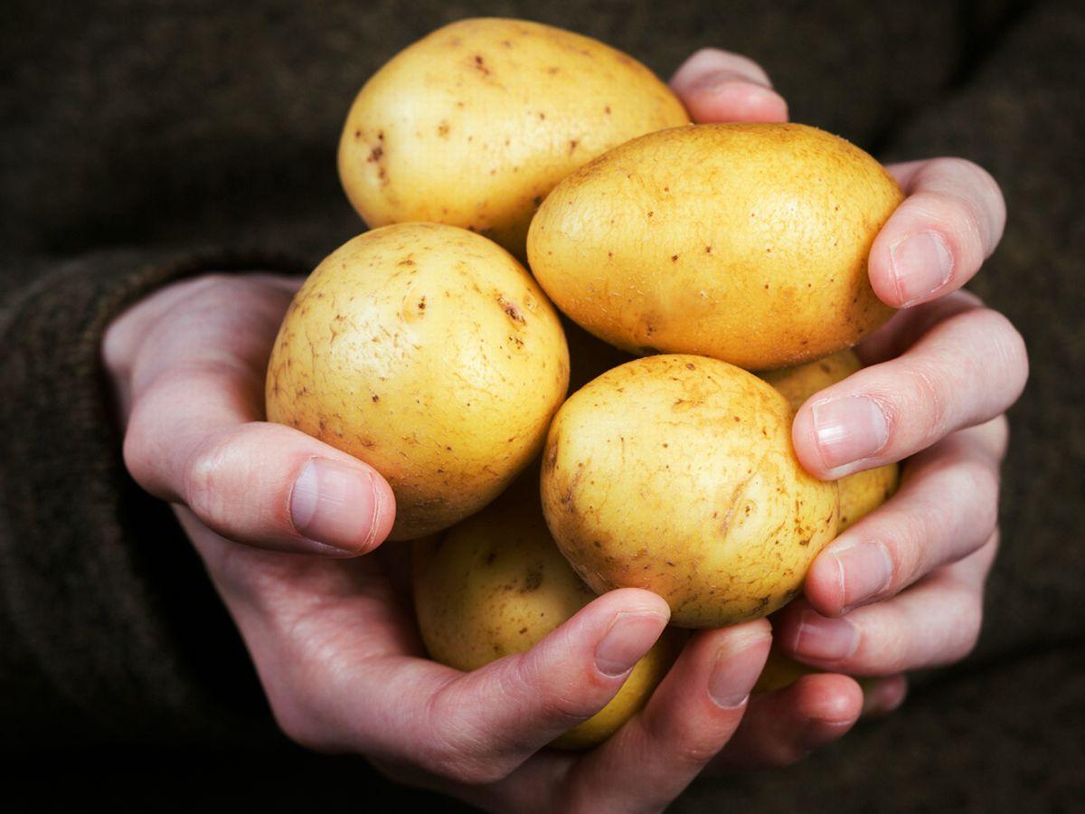 Patates Bozulur mu? Patates Buzdolabında Saklanır mı?